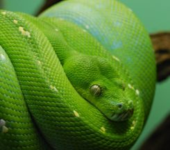 snake_514114-edit-958x848