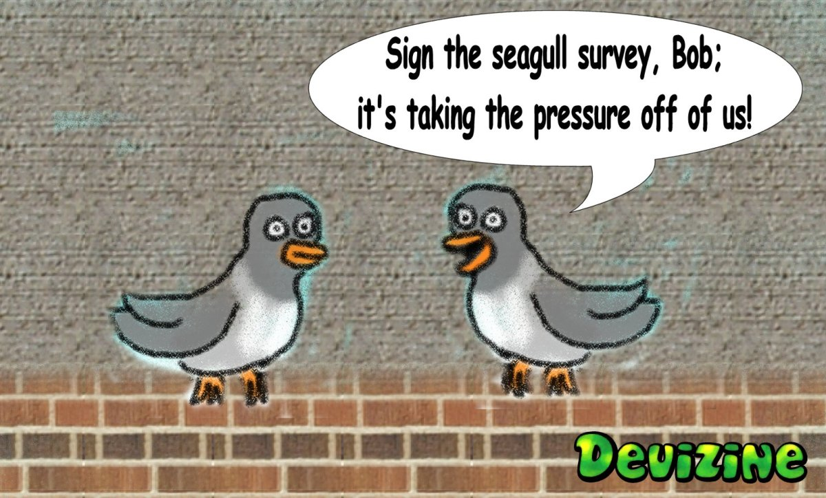 Sign the Seagull Survey,Bob!