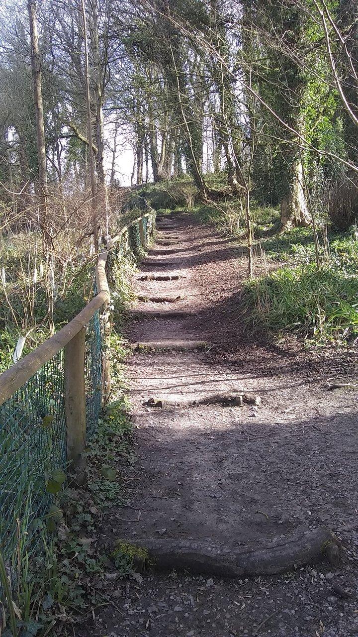 Protect Drews Pond Wood Area